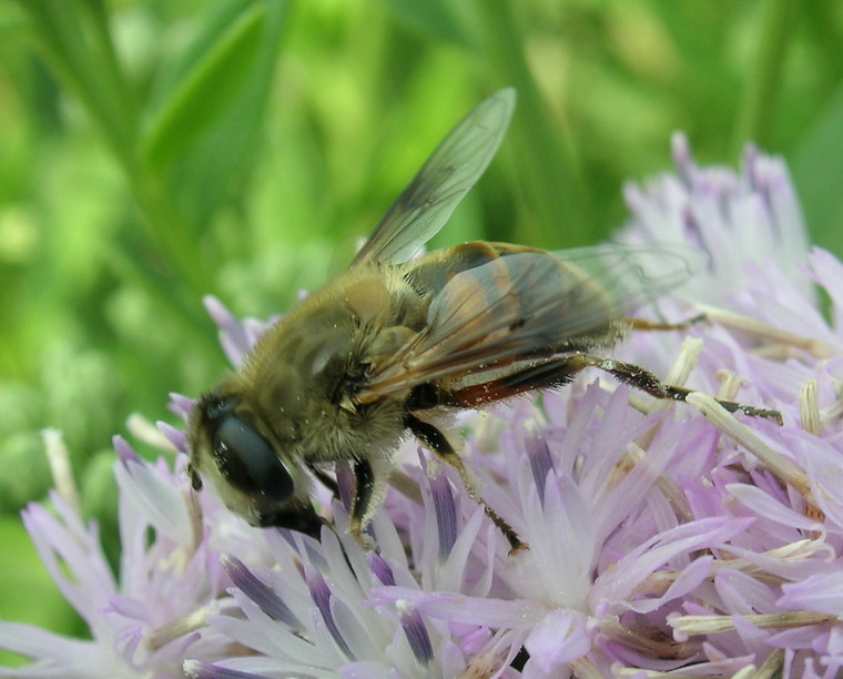 可爱的小动物,包括苍蝇